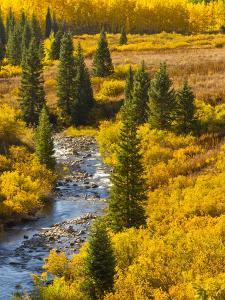 Gunnison National Forest, Colorado, USA by Cathy & Gordon Illg