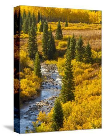 Gunnison National Forest, Colorado, USA