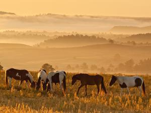 Paint Horses at Black Hills Wild Horse Sanctuary, South Dakota, Usa by Cathy & Gordon Illg