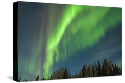 USA, Alaska. Aurora Borealis over Forest
