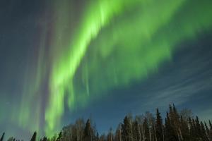 USA, Alaska. Aurora Borealis over Forest by Cathy & Gordon Illg