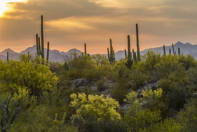 USA, Arizona, Saguaro National Park. Desert Landscape