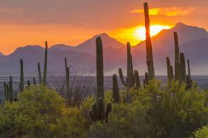 USA, Arizona, Saguaro National Park. Sunset on Desert Landscape by Cathy & Gordon Illg