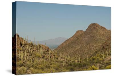 USA, Arizona, Saguaro National Park. Valley in Desert Landscape