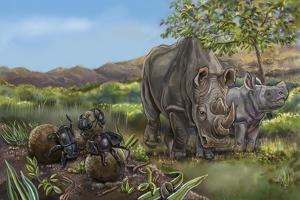 Nature Recycles Spread 13 Dung Beetle by Cathy Morrison Illustrates
