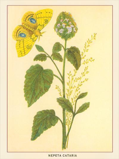 Catnip And Butterfly-Found Image Press-Art Print