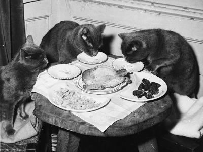 Cats' Celebratory Feast--Photographic Print