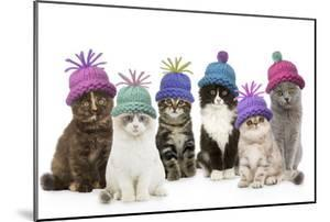 Cats, Group Wearing Woolly Hat