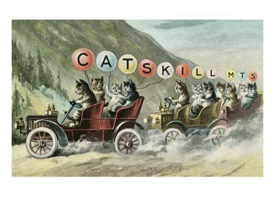 Cats in Cars, Catskill Mountains, New York--Art Print
