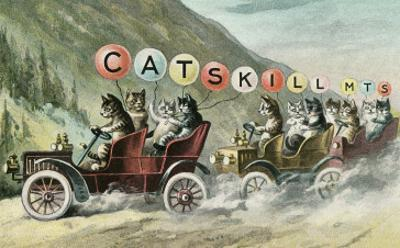 Cats in Cars, Catskill Mountains
