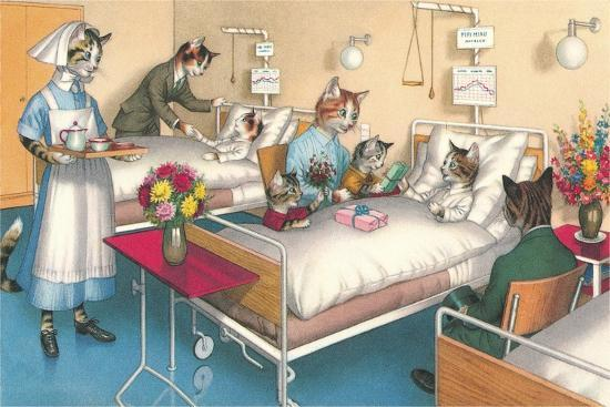 Cats in the Hospital--Art Print
