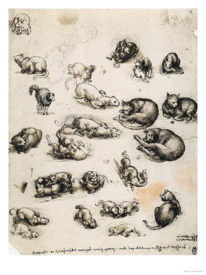 Cats, Lions and Dragons, Drawing, Royal Library, Windsor-Leonardo da Vinci-Giclee Print