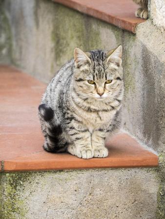 https://imgc.artprintimages.com/img/print/cats-roaming-the-cave-dwelling-town-of-matera_u-l-q1gsuqj0.jpg?p=0