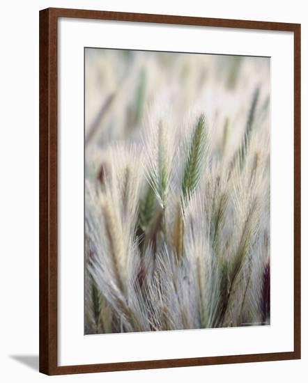 Cattails-John Luke-Framed Photographic Print