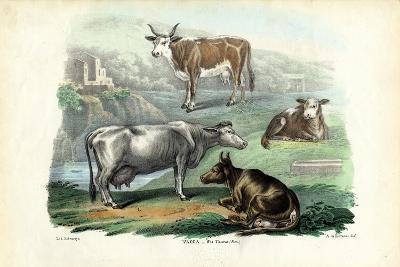 Cattle, 1863-79-Raimundo Petraroja-Giclee Print
