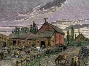Cattle and Barns of a Canadian Homestead About 1850