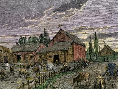Cattle and Barns of a Canadian Homestead About 1850--Giclee Print