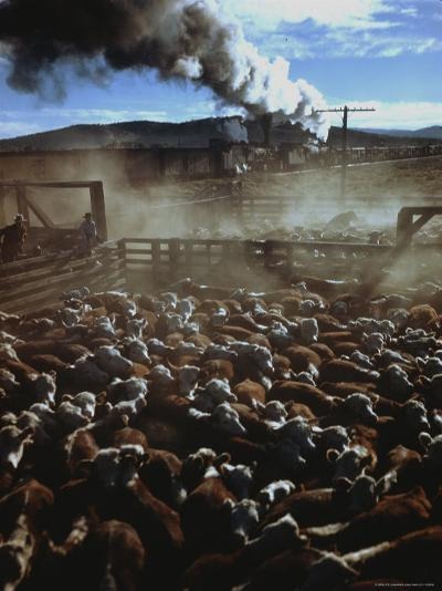Cattle Drive at Trinchera Ranch-Loomis Dean-Photographic Print