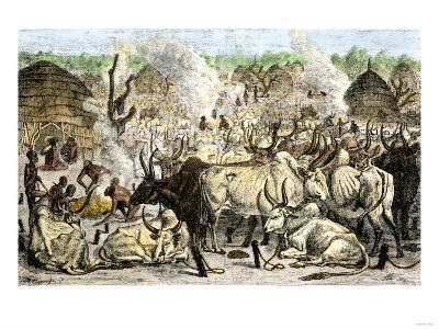 Cattle Farm of the Dinka, a Swahili-Speaking People in Africa, 1800s--Giclee Print