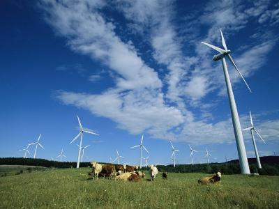 Cattle Graze Around Windmills-Steve Winter-Photographic Print