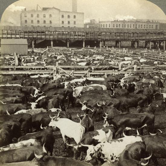 Cattle, Great Union Stock Yards, Chicago, Illinois, USA-Underwood & Underwood-Photographic Print