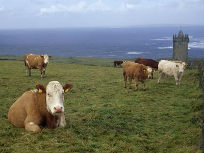 Cattle in a Field Near Restored 14th Century Donnagore Castle-xPacifica-Photographic Print