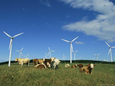 Cattle in a Field with Rows of Windmills-Steve Winter-Photographic Print