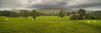https://imgc.artprintimages.com/img/print/cattle-in-a-meadow-pendle-hill-clitheroe-lancashire-england_u-l-pgep7e0.jpg?p=0