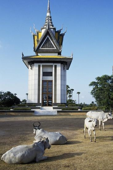Cattle in Front of Choeung Ek--Giclee Print