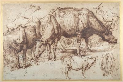Cattle in Pasture, C.1618-20-Sir Anthony Van Dyck-Giclee Print