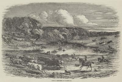 Cattle Mustering in Australia-Harrison William Weir-Giclee Print