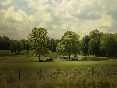 Cattle Pond in Summer-Jai Johnson-Giclee Print