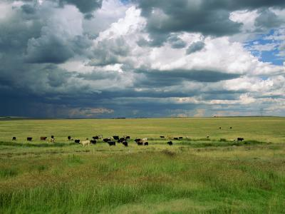 Cattle Ranching, N3 Highway, South Africa, Africa-Alain Evrard-Photographic Print