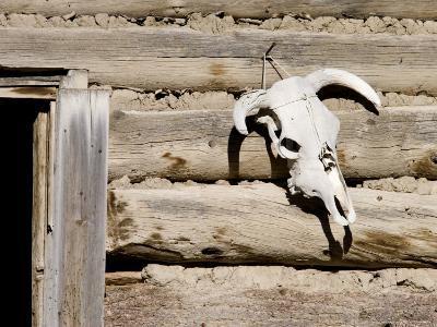 Cattle Skull on Cabin near Salmon, Idaho, USA-Chuck Haney-Photographic Print