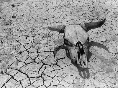 Cattle Skull on the Parched Earth-Arthur Rothstein-Photographic Print