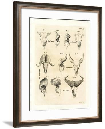 Cattle Skulls--Framed Giclee Print