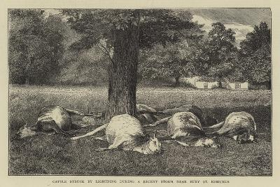 Cattle Struck by Lighting During a Recent Storm Near Bury St Edmunds--Giclee Print