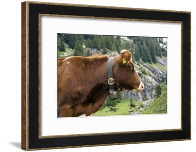 Cattle, Switzerland-Bob Gibbons-Framed Photographic Print