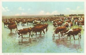 Cattle Watering on the Range, Texas