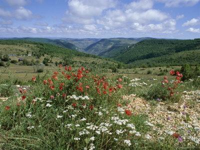 Causse Mejean, Gorges Du Tarn Behind, Lozere, Languedoc-Roussillon, France-David Hughes-Photographic Print