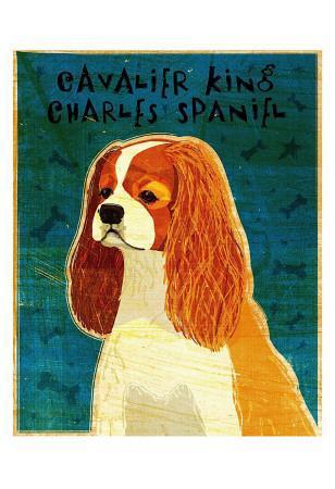 https://imgc.artprintimages.com/img/print/cavalier-king-charles-blenheim_u-l-f4eo020.jpg?p=0