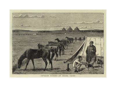 Cavalry Horses at Grass, Cairo--Giclee Print
