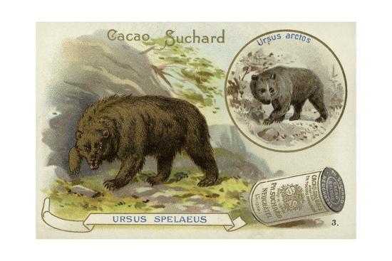 Cave Bear and Brown Bear--Giclee Print