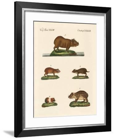 Cavys--Framed Giclee Print