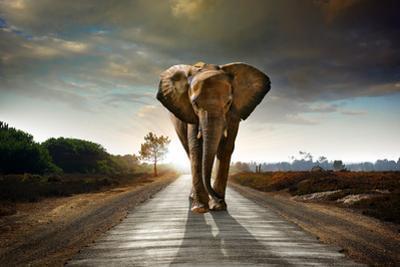 Walking Elephant by ccaetano