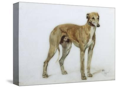 A Fawn Greyhound, 1897