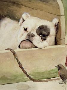 Bulldog, 1927 by Cecil Aldin