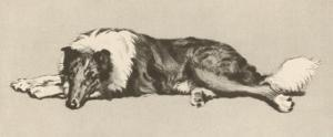 Collie Dog Relaxes by Cecil Aldin