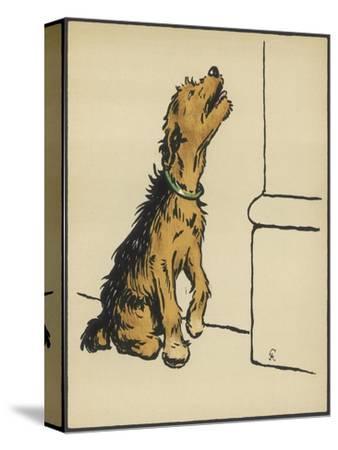 Dog in a Green Collar