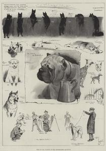 Dogs of All Nations at the Westminster Aquarium by Cecil Aldin